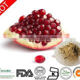 Bulk Supply Pomegranate Seeds Extract 40%Polyphenols Powder/Pomegranate Seeds P.E Wholesale