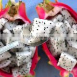 IQF Dragon Fruit Dices (frozen Fruit)