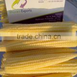Fresh Baby Corn/Baby Corns/ Peeled Baby Corns!