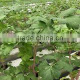PVC Hydroponic Channels 75mmx50mm for crops