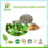 High Quality Natural Houttuynia Cordata Extract