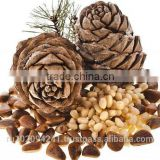 High quality pine nuts from Russia