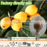 Manufacturing can OEM natural organic Loquat Leaf Extract Powder