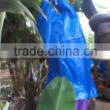 Banana Growing Plastic Bag