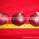 Red Onion Price, Yellow Onion Factory