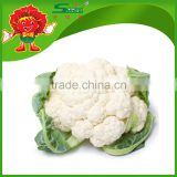 Bulk Chinese Frozen Cauliflower