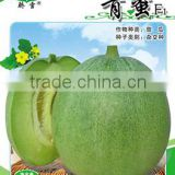 Cold Resistance Bad Weather Resistance Green Sweet Melon Seeds F1 For Growing-Green Honey F1