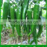 INQUIRY about AP031 Qimeng good quality green long pepper seeds