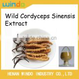 100% Natural Health Food Wild Cordyceps Sinensis Extract