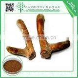 Free of sample Deer Antler Velvet Extract Powder 20:1 / 120 mesh with low price