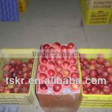 apples fresh red huaniu apple from china