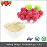 High quality natural plant berry extract bilberry extract powder
