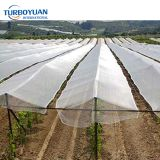 white woven plastic hail protection network netting for fruit apple tree / outdoor tomatoes protection