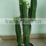 artificial green plants/artificial indoor cactus/artificial potted cactus/artificial cactus plant