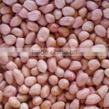 Farmer Specialized Cooperative Organization Direct sales of 2012 Blanched peanut kernels(25/29),