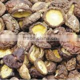 Wholesale Dried Edible Chinese Mushrooms