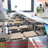 Automatic Egg Grading Equipment & Egg Packing Equipment