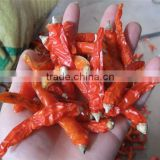 Pepper Stem Tail Cutting Machine/Red chilli stem cutting and removing machine