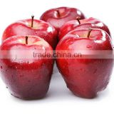 Fresh Huaniu apple with best price for sale