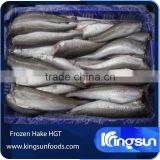 Frozen canadian hake HGT fish seafood supplier in china