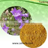 Natural Balloon Flower Root Extract 10:1