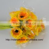 Decorative Flower Fresh Gerbera Fresh Cut Flowers Yellow Gerbera For Banquets - Champagne