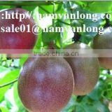 HIGH QUALITY FROZEN PASSION FRUIT WITH COMPETITIVE PRICE/ VIETNAM PASSION FRUITS/ TROPICAL FRUITS 2016.