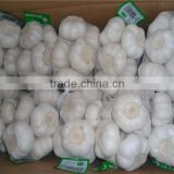 Hot selling garlic wholesale High Quality fresh ginger and garlic used garlic peeler machine