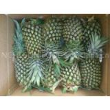 Sell Fresh Pineapple