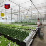 Agricultural Greenhouse for Vegetable/ Hydroponic Greenhouses