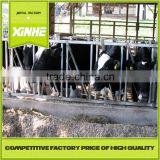Hot sale wholesale Cow Headlocks / cow farm equipment / 4 Cows Headlocks                                                                         Quality Choice