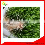 Wheat Seed Sprout Growing Machine / Barley Grass Growing Machine / Bean Grass Making Machine