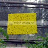 yellow sticky insect trap