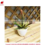 mini potted succulents flowering succulent plants preserved mini succulent plants bonsai