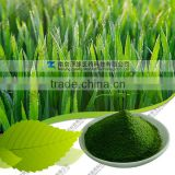 Wholesle barley grass powder manufacture