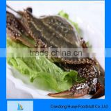 Fresh frozen high quality blue crab price