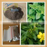 Natural Sex Herb Medicine Damiana Leaf Extract Damiana Herb Best Sexual Stimulant