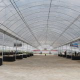 Economical Plastic Film Greenhouse for Tropical Area/Africa