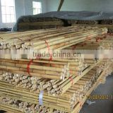 Bamboo Canes at Cheap Price