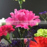 Beautiful Carnation Flowers Long Stem As Wedding Flower Natural Export Carnation Wholesale