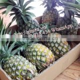 fresh pineapple sweet