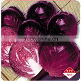 Chinese vegetable hybrid cabbage Seeds Kale Seed vegetable seeds for planting-Rinda