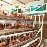Q235 material automatic feeding A type hot galvanized & electric galvanzied design layer chicken cages chicken cage