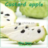 Good Quality Fresh Custard apple for sale