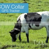 cow gps tracker collar gps tracker for animals with solar panel and built in battery Kingneed T500