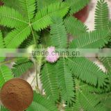 Pure Mimosa pudica extract powder for crocetin
