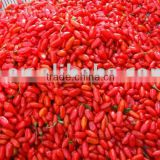 Dried Goji Berry Seed
