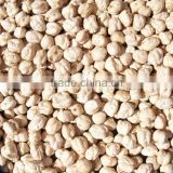 Superior Quality Kabuli Chickpeas