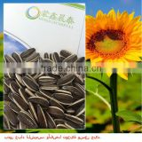 New Crop The Biggest Export Factory Price Of Sunflower seeds China Suppliers