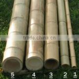 Commercial natural Bamboo pole